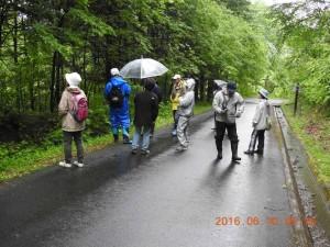 2016年6月10日南丘森林公園(北見市)早朝探鳥会