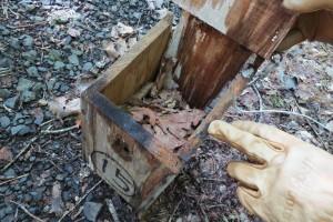 ヒメネズミが使った巣箱には落ち葉がぎっしり