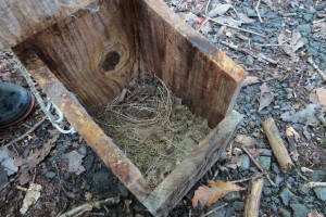 キビタキ?の巣