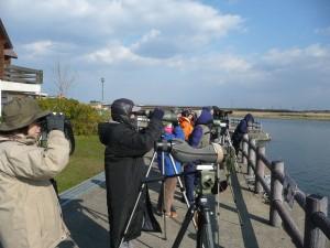 2016年10月30日女子探鳥会:濤沸湖白鳥公園