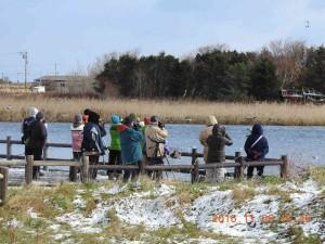 2016年11月6日濤沸湖探鳥会
