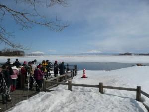 2017年3月26日濤沸湖探鳥会