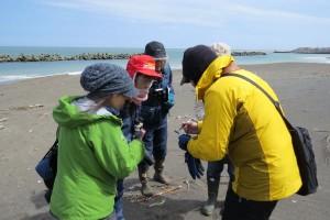 2017年4月22日海岸調査講習会(常南ビーチ)の様子