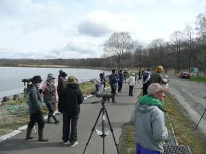 2018年5月6日網走湖女満別湖畔探鳥会の様子