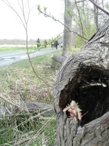 湖畔道路脇の樹洞に怪獣が・・・(おもしろいけれど、持ち帰りましょうね)
