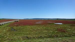 能取湖:卯原内サンゴ草群落