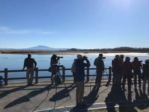 2018年11月4日涛沸湖探鳥会