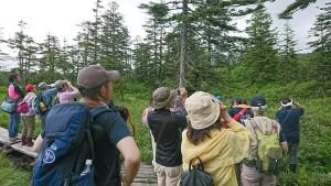 2019年7月21日浮島湿原探鳥会(滝上町)