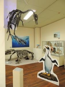 網走市立郷土博物館企画展「網走の化石展」
