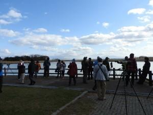 2019年11月3日濤沸湖白鳥公園探鳥会